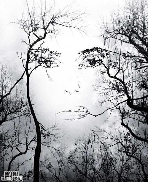 awesome,faces,nature,trees