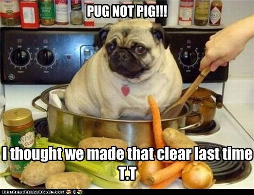confusion,cooking,dinner,do not want,noms,not,pig,pot,pug,upset