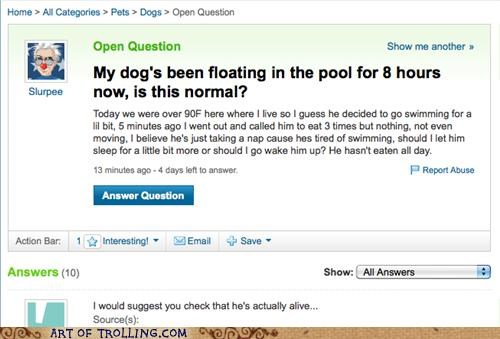 dead dogs floating pool Yahoo Answer Fails - 4733576448