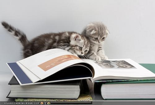 books,cyoot kitteh of teh day,literary,reading,smart,two cats
