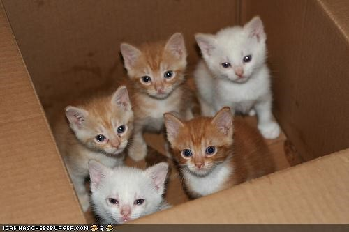 box boxes cardboard box cyoot kitteh of teh day forever home lots of cats - 4733828096