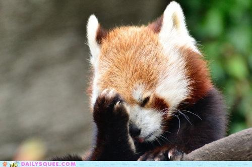 acting like animals,ashamed,embarrassed,explaining,explanation,face,facepalm,palm,red panda,upset