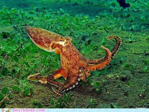 acting like animals fight fighting octopus threatening threats upset - 4734079488