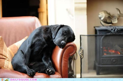 asleep bed couch dogs imagination labrador pragmatism sleeping transformation willpower - 4734171392