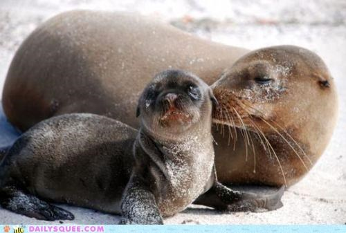 answer baby mother mothers day no question sea lion sea lions - 4734300160