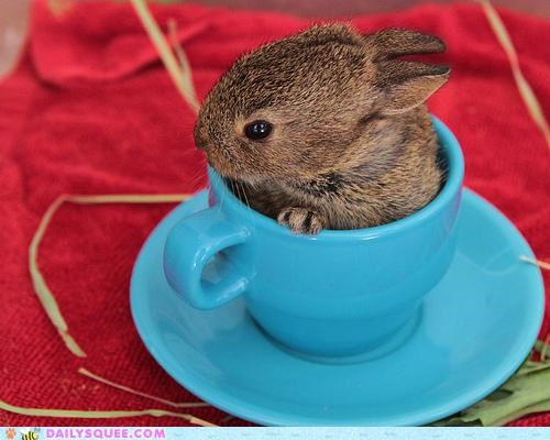 Bunday bunny caffeine happy happy bunday hop pun rabbit step strong tea teacup - 4734433280