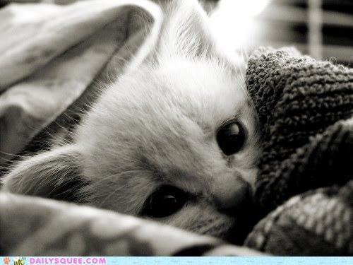 bedtime books cat kitten options request story - 4734461696
