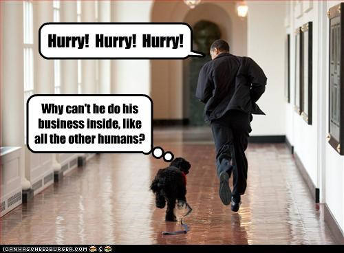 barack obama dogs political pictures - 4735448832