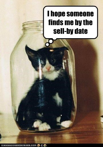 caption captioned cat date expiration finds hope jar kitten sell-by someone - 4735551744