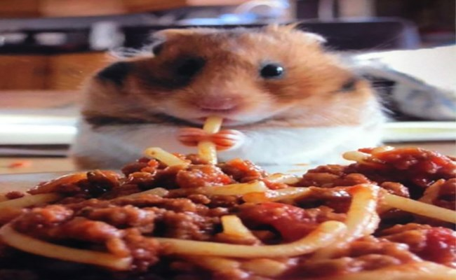 cute hamsters eating funny - 4736005