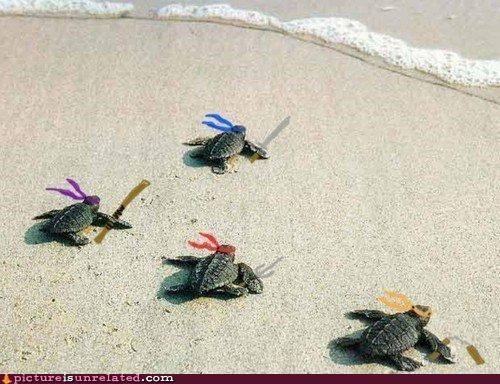 beach,teenage mutant ninja turtles,turtle,wtf