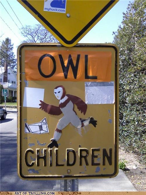 children,IRL,owls,slow