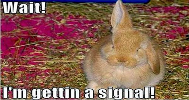 rabbit memes Memes funny rabbits - 4736773