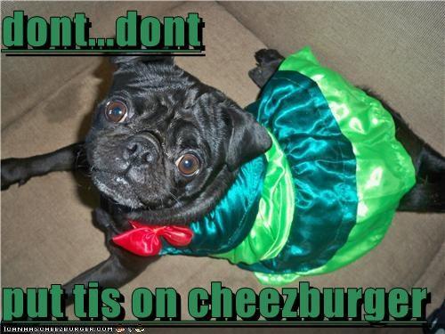 Cheezburger Image 4737460224