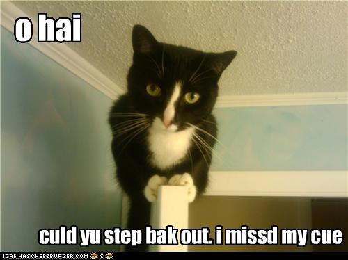 caption,captioned,cat,cue,door,missed,ohai,out,perching,question,request,step