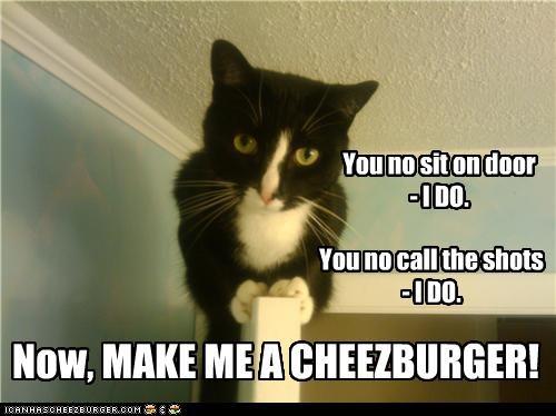 Cheezburger Image 4738616064