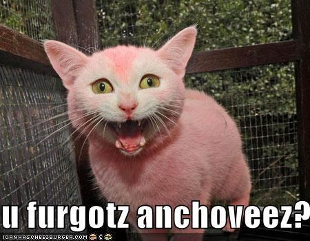 Cheezburger Image 4738999552