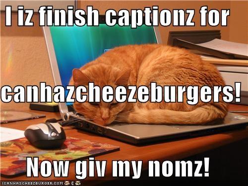 Cheezburger Image 4739003648