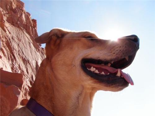 doggeh,Sundog,utah