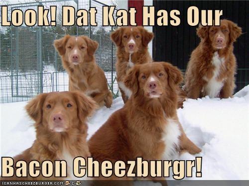 Cheezburger Image 4740525312