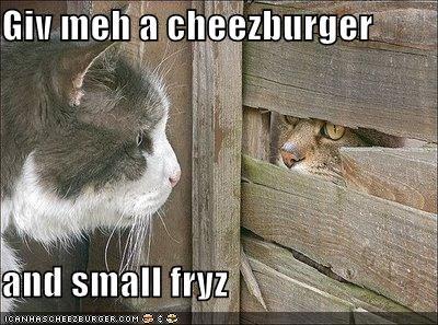 Cheezburger Image 4741620480