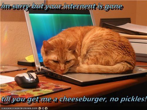 Cheezburger Image 4742289408