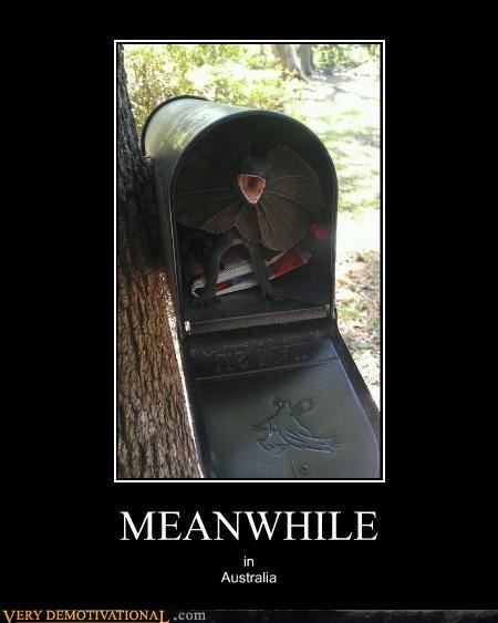austrailia,lizard,mailbox,Meanwhile,Terrifying