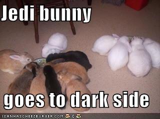 bunnies eating film food movies rabbits star wars - 474271488