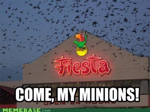 birds come fiesta heed Memes minions - 4742845952