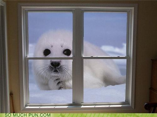 double meaning homophone literalism seal sealed sealing window window seal - 4742857984