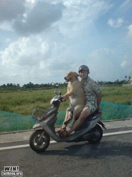animals dogs driver pets scooters - 4743115008