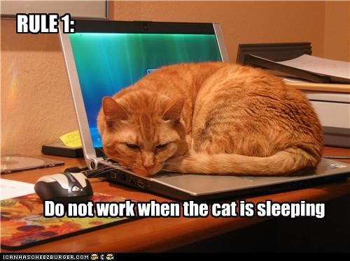 RULE 1: Do not work when the cat is sleeping