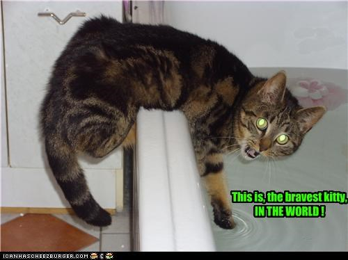 This is, the bravest kitty, IN THE WORLD !