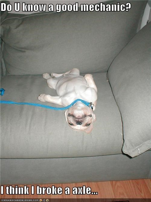 borked broke french bulldogs good mechanic puppy question upside down - 4743388416