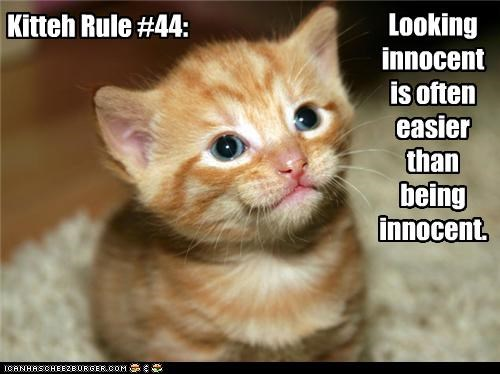Kitteh Rule #44: Looking innocent is often easier than being innocent.