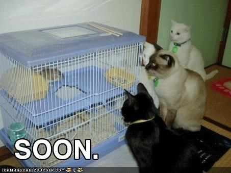 cage,caption,captioned,dinner,hungry,lots of cats,rat,scary,SOON