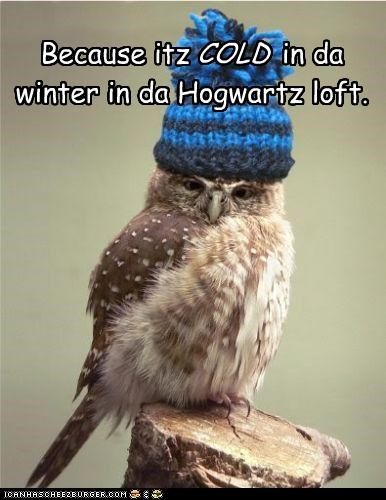 caption,captioned,cold,Harry Potter,hat,Hogwarts,loft,Owl,winter