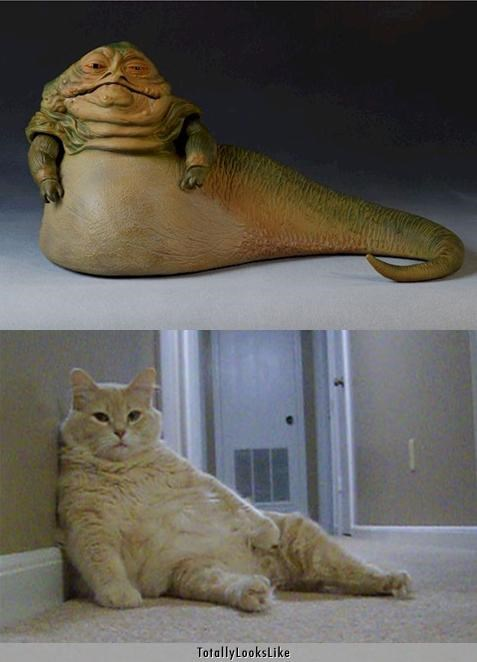animals,Cats,fat,Hall of Fame,jabba the hutt,star wars