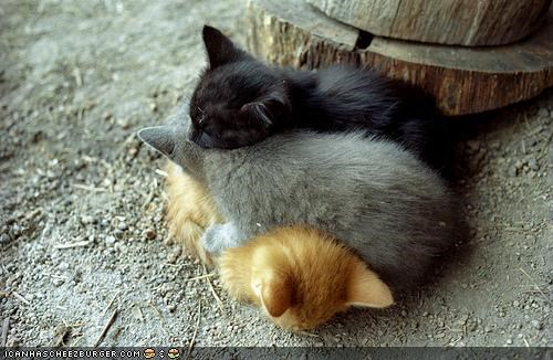 cyoot kitteh of teh day,gradient,napping,on top,pile,sleeping