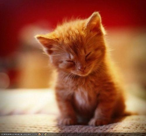 cyoot kitteh of teh day,kitten,meditation,orange,sleeping,tired