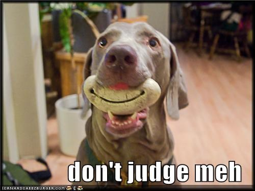 Cheezburger Image 4744357632