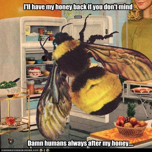 animal bee color funny wtf - 4745528064