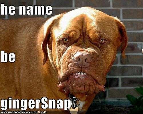 he name be gingerSnap