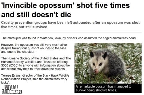 animals,completely relevant news,guns,life,possum