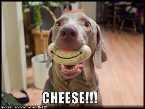 Cheezburger Image 4747125504