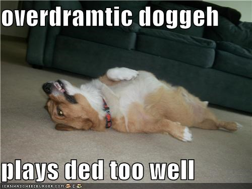 corgi,doing it right,dramatic,mixed breed,overdramatic,playing dead,too,well