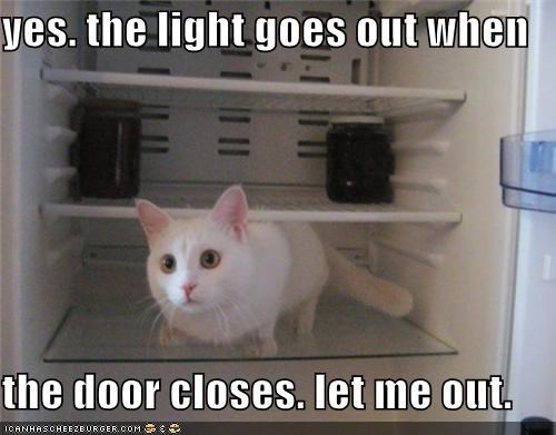 caption,captioned,cat,closes,correct,door,fridge,goes,let me out,light,out,refrigerator,request,when,yes