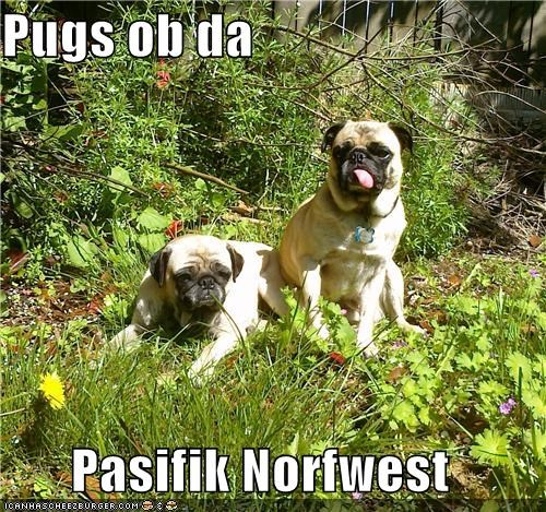 location pacific northwest pug pugs region regional