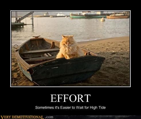 boat cat easy hilarious tide - 4747996416