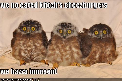 Cheezburger Image 4748069376